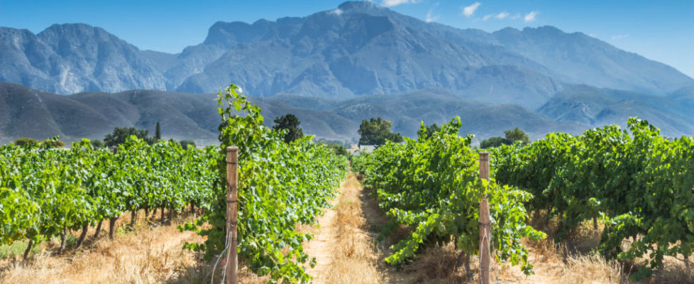 South African wine is among the oldest in the world, but only known on the international stage for about twenty years. Today, luxury travel to this remote region is high on food and wine lovers lists.
